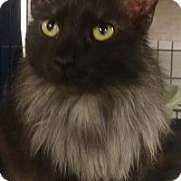 Adopt A Pet :: Patience - Centralia, WA