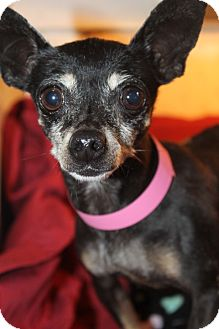 Chihuahua Mix Dog for adoption in Waldorf, Maryland - Bea