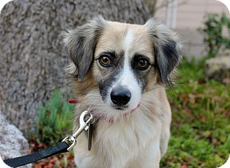 Spaniel (Unknown Type) Mix Dog for adoption in Los Angeles, California - Banjo