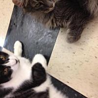 Adopt A Pet :: Dumplin - Fresno, CA