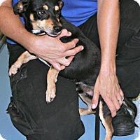Adopt A Pet :: Pedro - Lufkin, TX