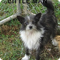 Adopt A Pet :: Little Man- 4# Lap Dog - Marlborough, MA