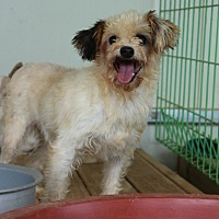Adopt A Pet :: Prada - Oakton, VA