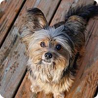 Adopt A Pet :: Tobias - Dayton, OH
