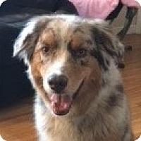 Adopt A Pet :: Riley - Minneapolis, MN