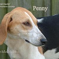Adopt A Pet :: Penny - New Bern, NC