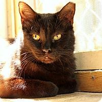 Adopt A Pet :: Elke - McCormick, SC