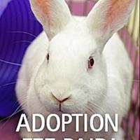 Adopt A Pet :: Francis - Novato, CA