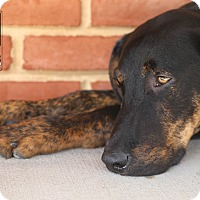 Adopt A Pet :: Thomas - Manassas, VA