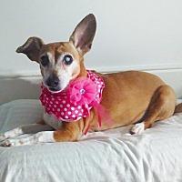 Adopt A Pet :: Pixie - Bronx, NY