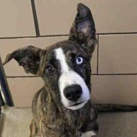 Adopt A Pet :: HAIRY PAWTER - Fort Wayne, IN