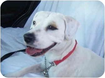 Hound (Unknown Type)/Beagle Mix Dog for adoption in Boca Raton, Florida - Shayna