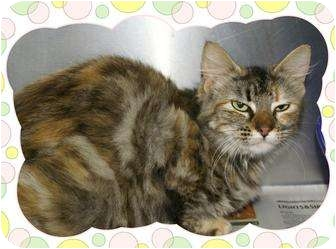Domestic Longhair Cat for adoption in Mobile, Alabama - Emmie