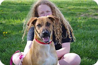 Shepherd (Unknown Type) Mix Dog for adoption in Elyria, Ohio - REX-Prison Grad