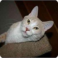 Adopt A Pet :: Blake - Montgomery, IL