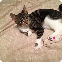 Adopt A Pet :: Bobbie - Chicago, IL