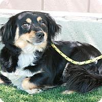 Adopt A Pet :: Ruby - Canoga Park, CA