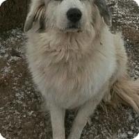 Adopt A Pet :: Natasha - Minneapolis, MN