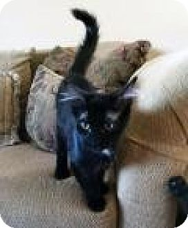 Domestic Mediumhair Kitten for adoption in Mission Viejo, California - Kalamazoo