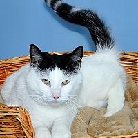 Adopt A Pet :: Walter - Gatineau, QC