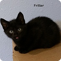 Adopt A Pet :: Fritter - Portland, OR