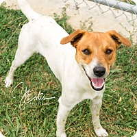 Adopt A Pet :: Ben in Dallas, TX - Dallas/Ft. Worth, TX