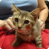 Adopt A Pet :: Atom - Temecula, CA