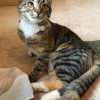 Adopt A Pet :: Zelda - Ashland, VA