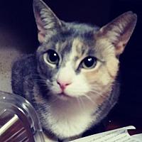 Adopt A Pet :: Squash - Trevose, PA