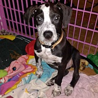 Adopt A Pet :: Toby - Clear Lake, IA