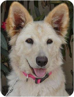 Shepherd (Unknown Type) Mix Puppy for adoption in Los Angeles, California - Pasha von Pennington
