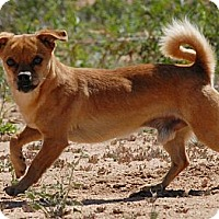 Adopt A Pet :: Rusty - Poway, CA