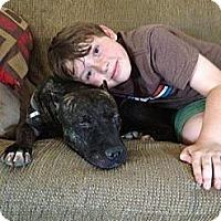 Adopt A Pet :: Paloma - Fresno, CA