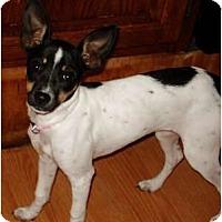 Adopt A Pet :: Malee - Oklahoma City, OK