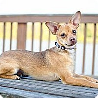Adopt A Pet :: Shui (shway) - Hilliard, OH