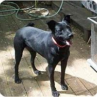 Adopt A Pet :: Cecil - Chicago, IL