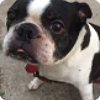 Adopt A Pet :: Jumping Jack Flash - Kingwood, TX