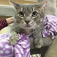 Adopt A Pet :: Grady - Baton Rouge, LA