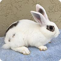 Adopt A Pet :: Treena - Bonita, CA