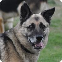 Adopt A Pet :: Angus - Dripping Springs, TX