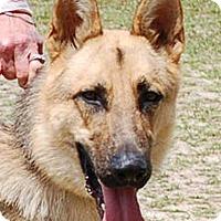 Adopt A Pet :: Maximus AD 05-20-17 - Preston, CT