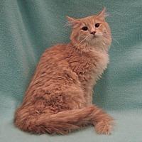 Adopt A Pet :: Xander - Redwood Falls, MN