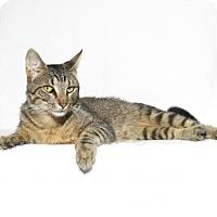 Adopt A Pet :: Tutt - Lufkin, TX