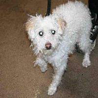 Adopt A Pet :: LOU - Aurora, IL