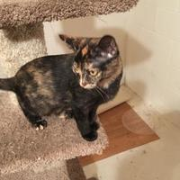 Adopt A Pet :: Stella - Owatonna, MN