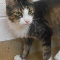Adopt A Pet :: Rascal - Wooster, OH