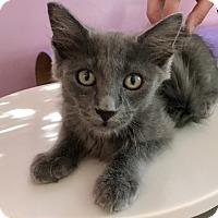 Adopt A Pet :: HARLIE - Bakersfield, CA