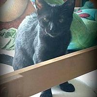 Adopt A Pet :: Luna - Millersville, MD