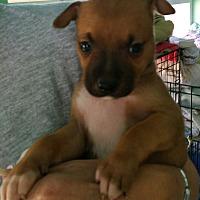 Adopt A Pet :: Puppy #1 - Creston, CA
