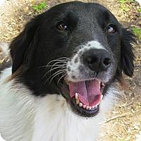 Adopt A Pet :: Joy - Houston, TX